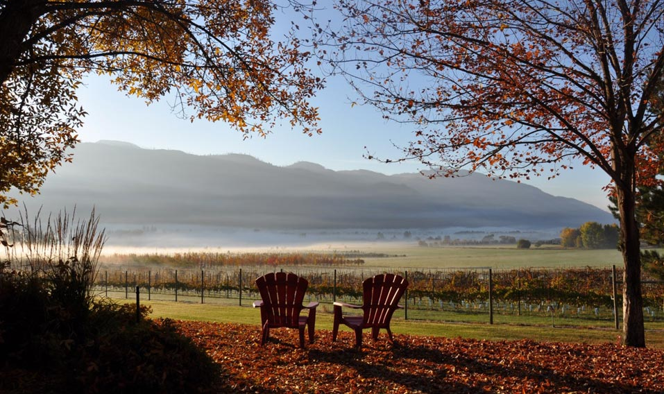 Chairs in the Vineyard - Slider Pic